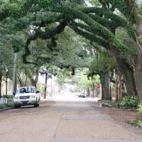 canopy road, State St, looking east, Mobile Ala (12-26-2011), Мобил