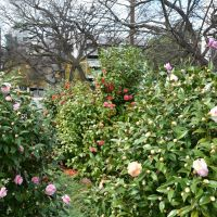 Capitol Blossoms, Монтгомери