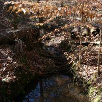 Stream along Nature Trail, Нью-Сайт