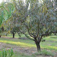 Chilton County Peach Orchard, Паинт Рок