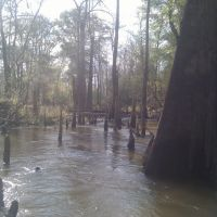 Big escambia creek, Поллард