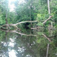 Fallen Tree, Поллард