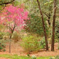 Mobile Botanical Garden - February 22, 2011, Причард