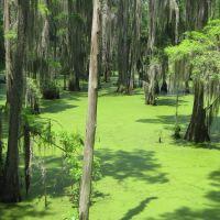 Brillant Swamp, Робинсон Спрингс