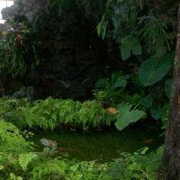 Tropical plants, Хомевуд