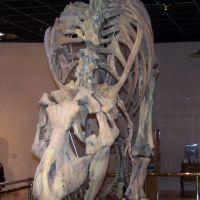 T-Rex, Меса