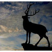 Elks Lodge, Паркер
