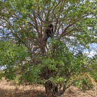 Sierra Tree, Сьерра-Виста