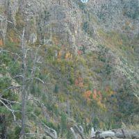 Fall Color, Mogollon Rim, AZ, Толлесон