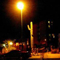 Nighttime Saguaro, Тусон