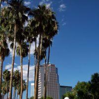 Palmiers au centre de Tucson, AZ, Тусон