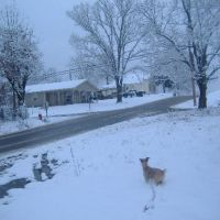 Our Dog dasiey Checking out the snow., Аткинс