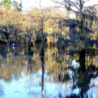 The Mill Pond in winter, Caddo Lake, Texas, Бакнер