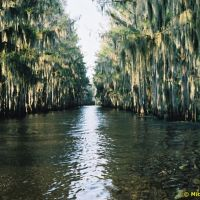 Government Ditch - Caddo Lake, Texas, Бакнер