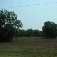 Trees off U.S. 65, Дермотт