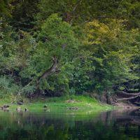 White River, Коттер
