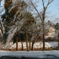 A Half Melted Tree, Маунтайн-Хоум