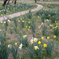 Spring is here - 2010, Озан
