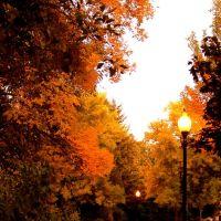 Fall, Олбани