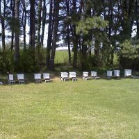 Entomology Club Apiary, Тонтитаун