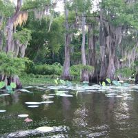Caddo Lake, Тэйлор