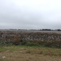 Madison -Arkansas - Cotton plantations, Форрест-Сити