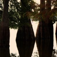 Dancing Trees, Хоппер