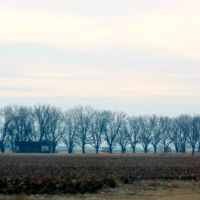 Lined Up and Bare - Winter Pecan Trees Along New 61, Хоппер