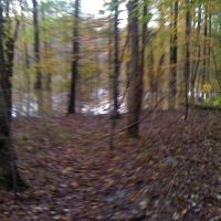 sherwoods biggest swamp, Шервуд