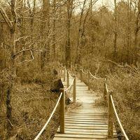 Walk Bridge, Шервуд