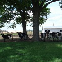 Dairy Farm, Элм-Спрингс