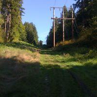 At the bottom of Norway Hill, Blyth Park, Ботелл
