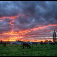Farm Sunset, Ботелл