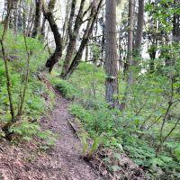 A Path, Ботелл