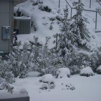 Snowy Morning 2, Бремертон