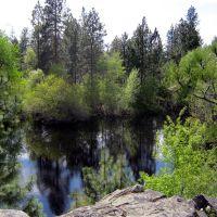 Dishmans Pond, Дишман