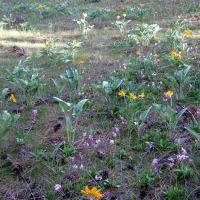 Wildflowers Blooming in Dishman Hills, Дишман