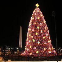 Big Christmas Tree, Ист-Венатчи-Бенч