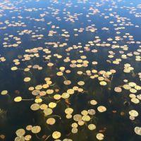 Lillies in Phantom Lake, Истгейт