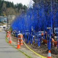 Installation of a very cool public art project in Kenmore Wa., Кенмор