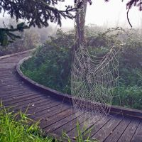 Totem Lake Foggy Web, Кингсгейт