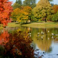 Fall on Lake Sacajaweja, Лонгвью