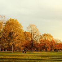 Cảnh Thu  (Autumn view), Меркер-Айланд