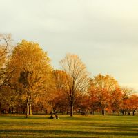 Cảnh Thu  (Autumn view), Ричланд