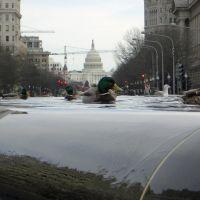 Ducks in the city Washington D.C. Capitol, Рос-Хилл