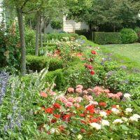 Rose Garden of White House, Рос-Хилл