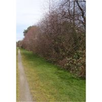 A trail, Уайт-Сентер