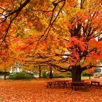 Blanket of Leaves, Берлингтон