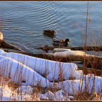 Champlain Lake winter, Берлингтон