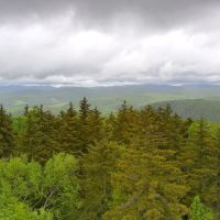 Vermont Forest from Allis State Park Firetower, Монпелье